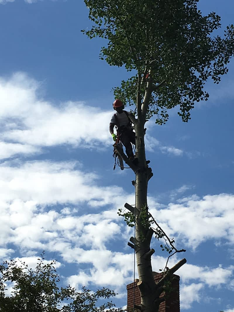 photo Pacifique Tree Care