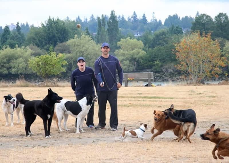 Dog Walking Services Mississauga