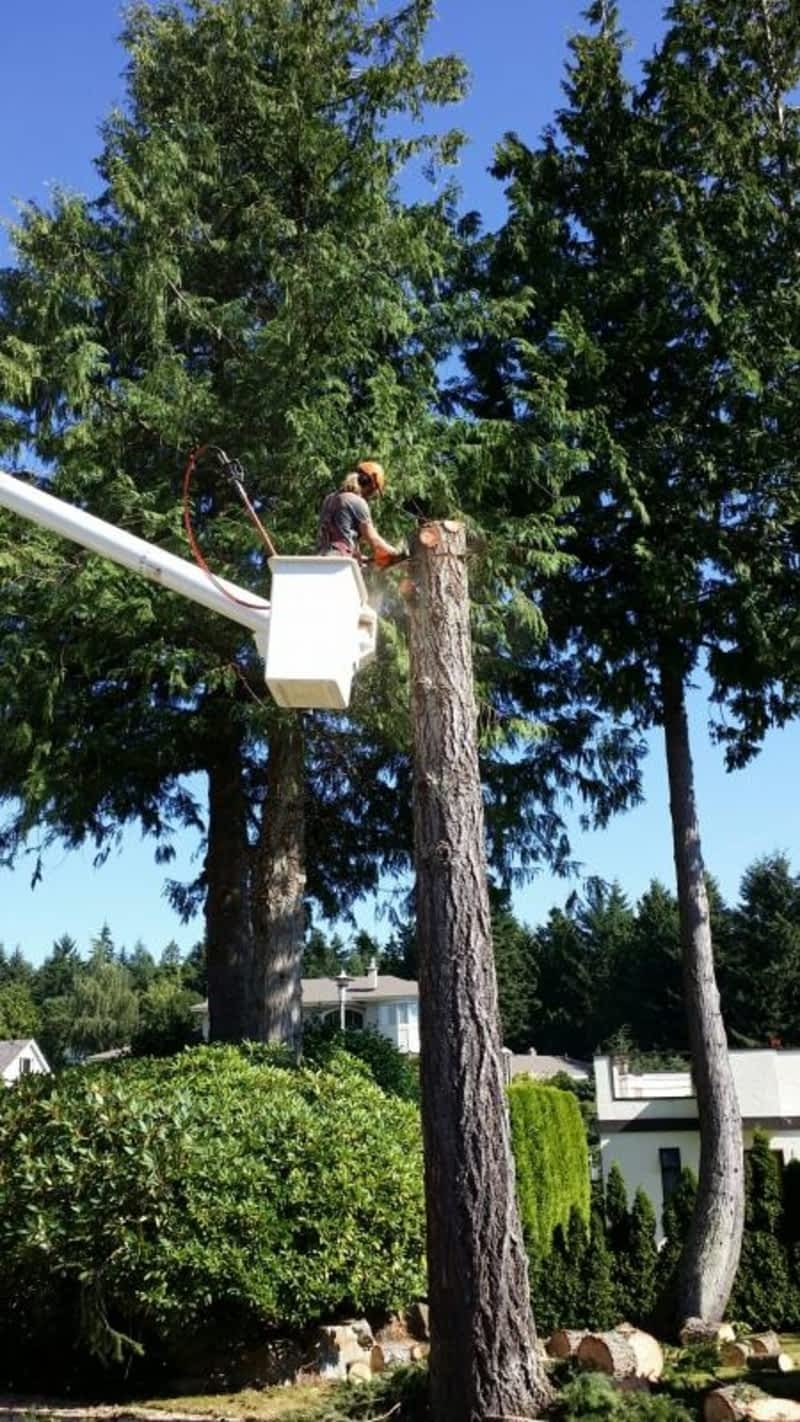 photo Capital Tree Service