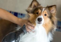 Doggie daycares and spas in Edmonton