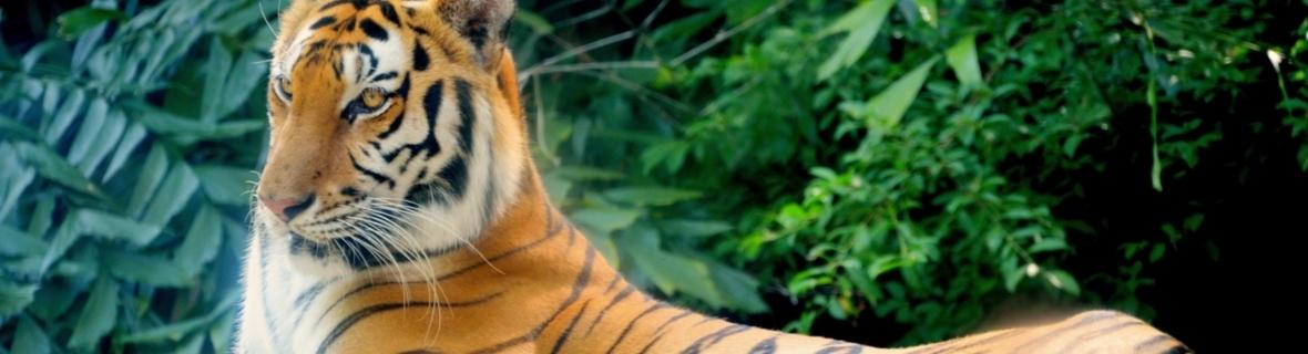See animals up close at these wildlife parks around Toronto