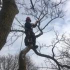 Reid's Tree Works - Tree Service - 705-888-7007