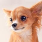 Wilmot Veterinary Clinic - Veterinarians