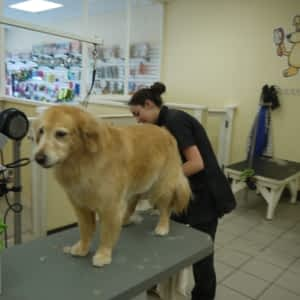 Paws In The Bath Opening Hours 190 Simcoe Ave Keswick On